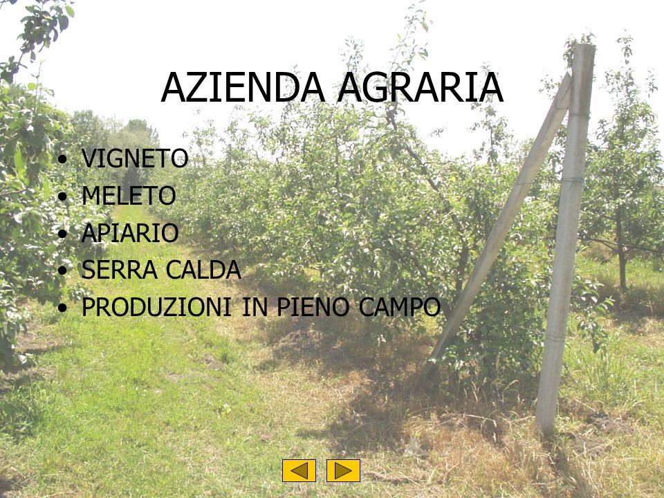 AZIENDA AGRARIA VIGNETO MELETO APIARIO SERRA CALDA