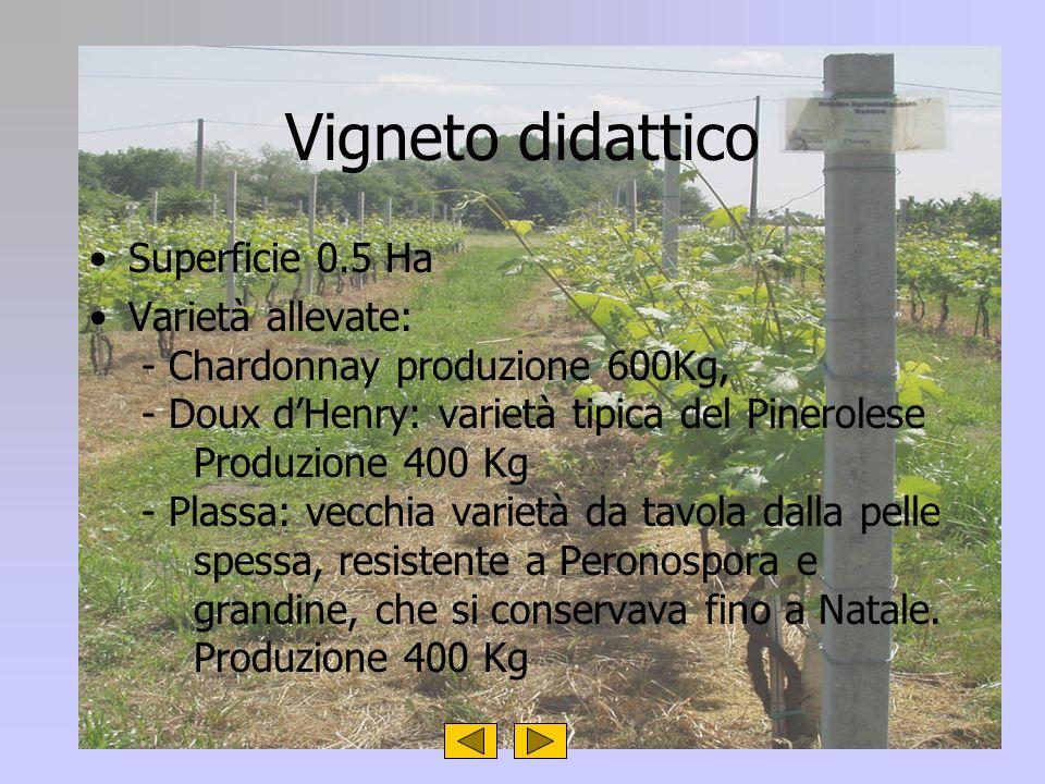 Vigneto didattico Superficie 0.5 Ha