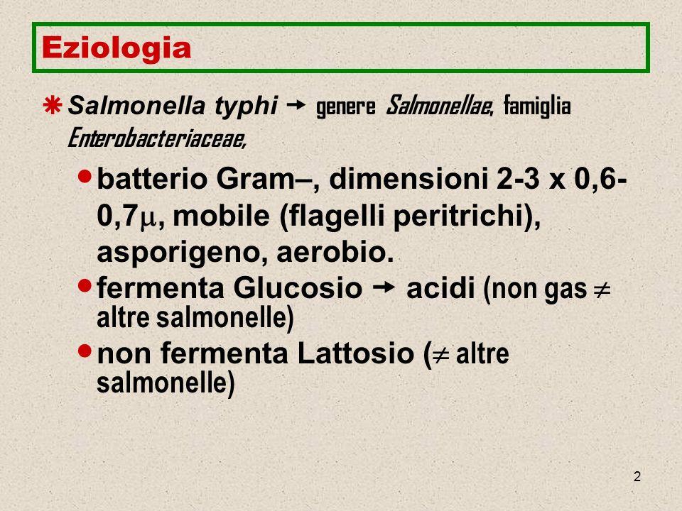 fermenta Glucosio  acidi (non gas  altre salmonelle)