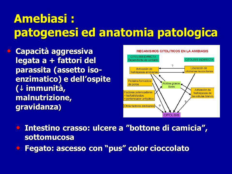 Amebiasi : patogenesi ed anatomia patologica