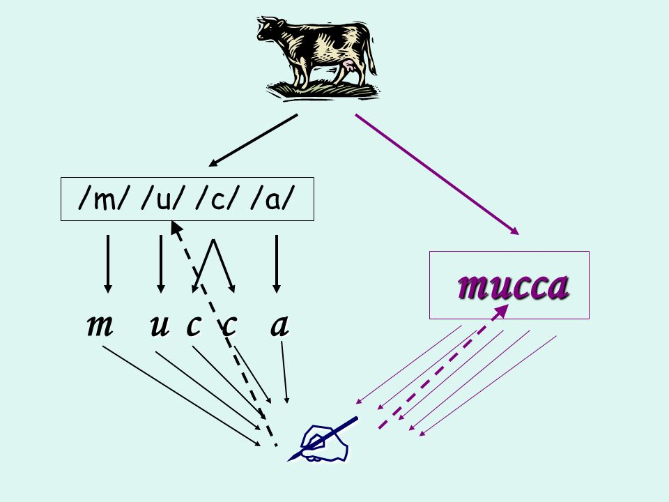 /m/ /u/ /c/ /a/ mucca m u c c a