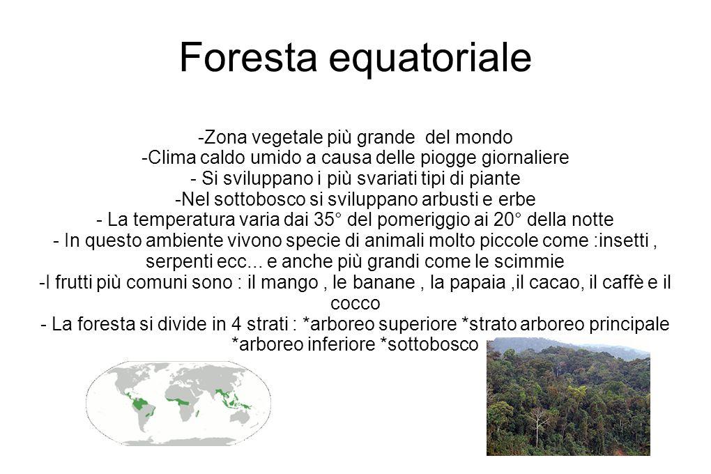 Foresta equatoriale -Zona vegetale più grande del mondo
