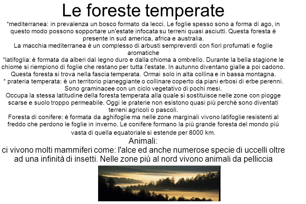 Le foreste temperate *mediterranea: in prevalenza un bosco formato da lecci.