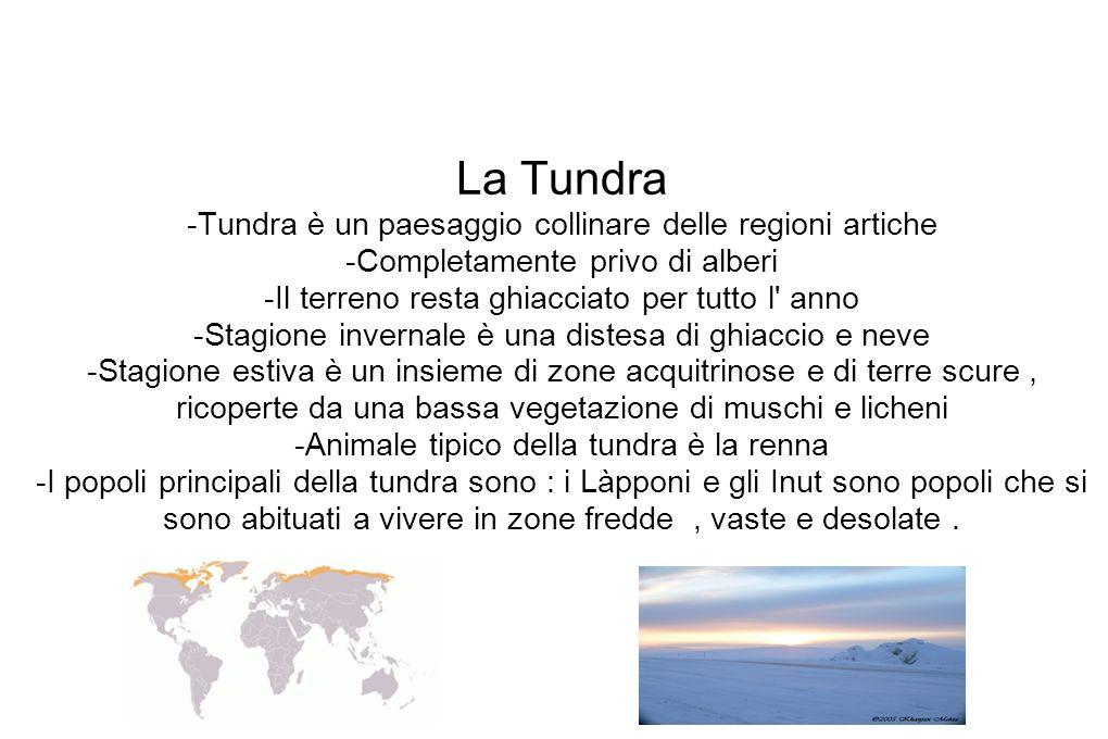 La Tundra -Tundra è un paesaggio collinare delle regioni artiche -Completamente privo di alberi -Il terreno resta ghiacciato per tutto l anno -Stagione invernale è una distesa di ghiaccio e neve -Stagione estiva è un insieme di zone acquitrinose e di terre scure , ricoperte da una bassa vegetazione di muschi e licheni -Animale tipico della tundra è la renna -I popoli principali della tundra sono : i Làpponi e gli Inut sono popoli che si sono abituati a vivere in zone fredde , vaste e desolate .