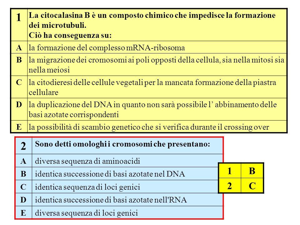 1 La citocalasina B è un composto chimico che impedisce la formazione dei microtubuli. Ciò ha conseguenza su: