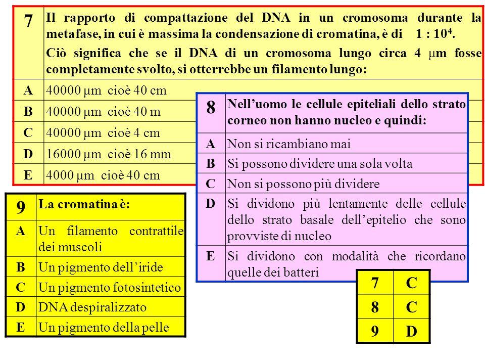 7 Il rapporto di compattazione del DNA in un cromosoma durante la metafase, in cui è massima la condensazione di cromatina, è di 1 : 104.