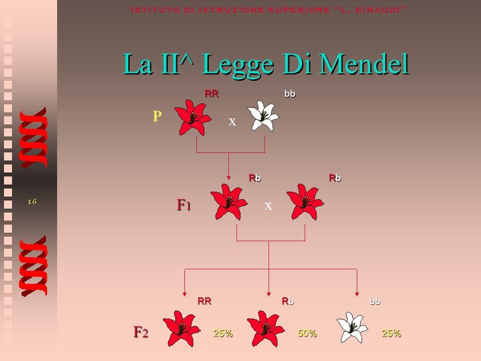 La II^ Legge Di Mendel RR bb P x F1 Rb x Rb F2 RR Rb bb 25% 50%