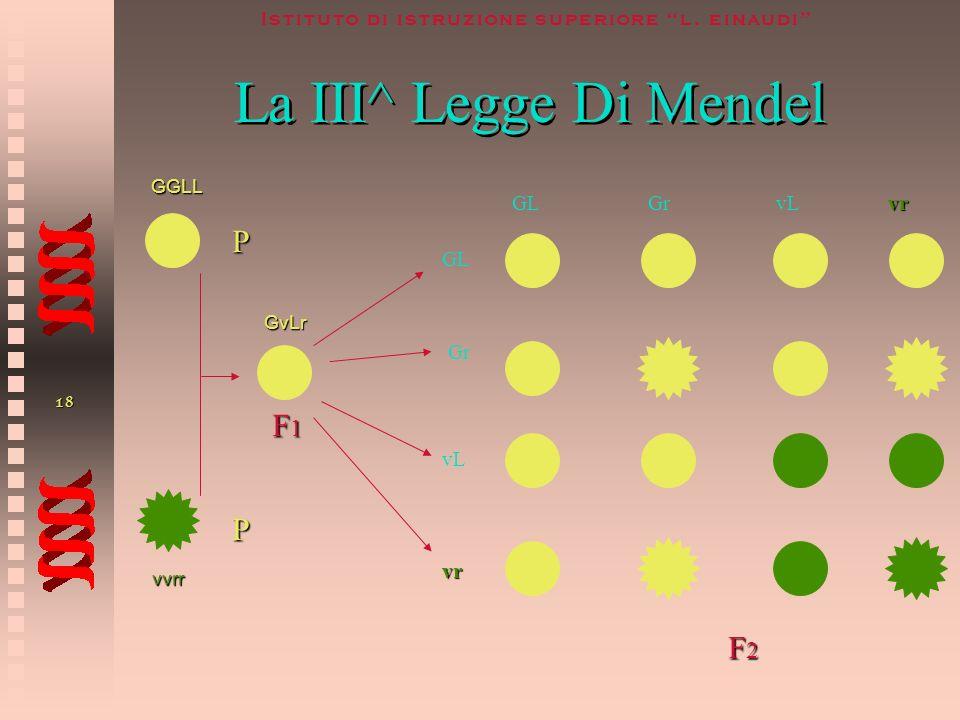 La III^ Legge Di Mendel P F1 P F2 GL Gr vL vr GL Gr vL vr GGLL GvLr