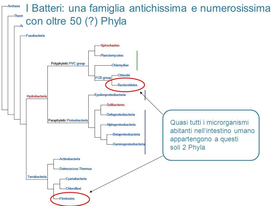 I Batteri: una famiglia antichissima e numerosissima