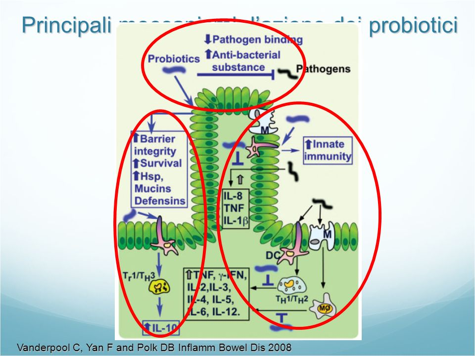 Principali meccanismi d'azione dei probiotici