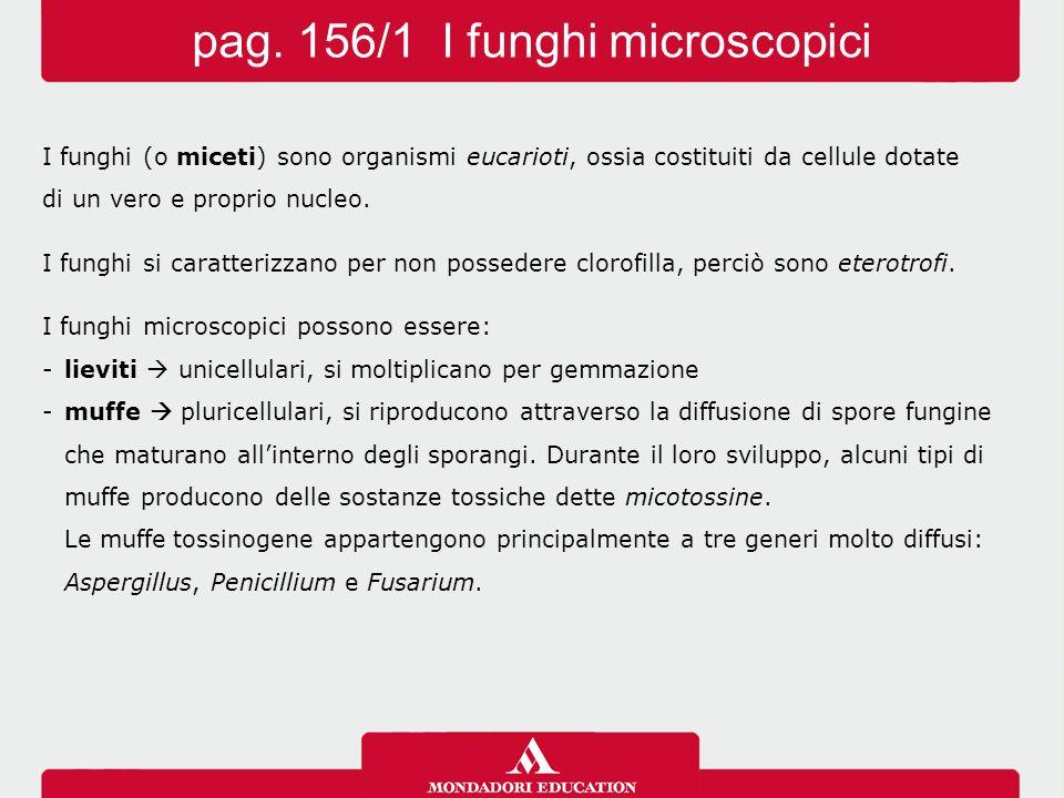 pag. 156/1 I funghi microscopici