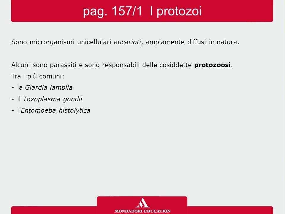 pag. 157/1 I protozoi Sono microrganismi unicellulari eucarioti, ampiamente diffusi in natura.