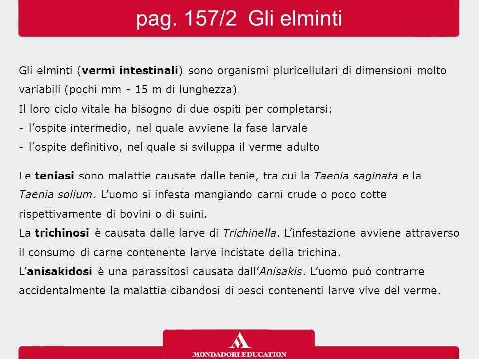 pag. 157/2 Gli elminti Gli elminti (vermi intestinali) sono organismi pluricellulari di dimensioni molto.