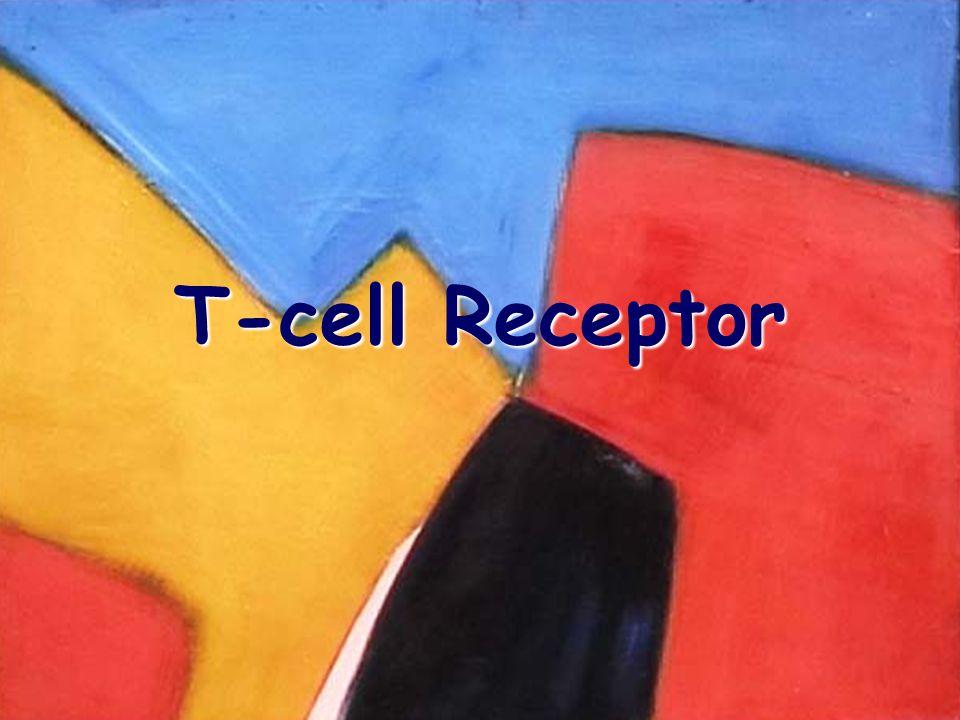 T-cell Receptor 2/9/04