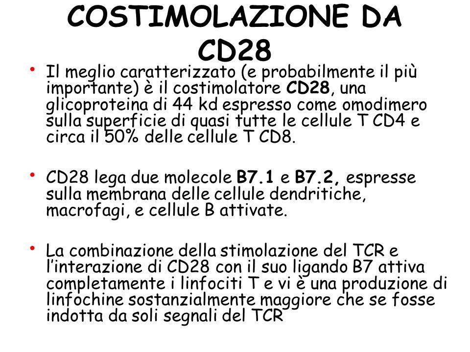 COSTIMOLAZIONE DA CD28