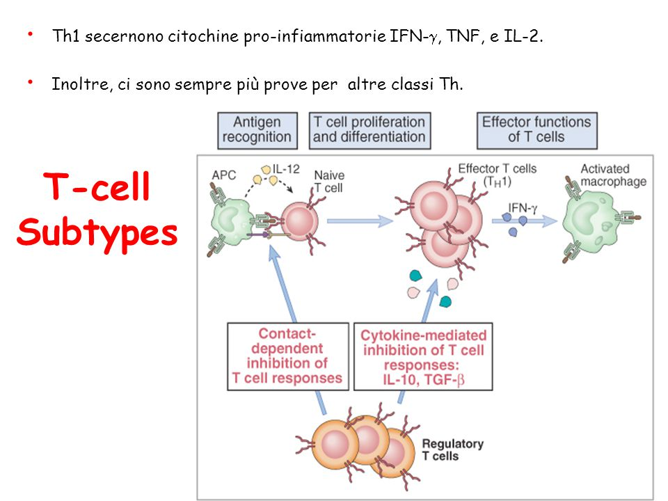 Th1 secernono citochine pro-infiammatorie IFN-g, TNF, e IL-2.