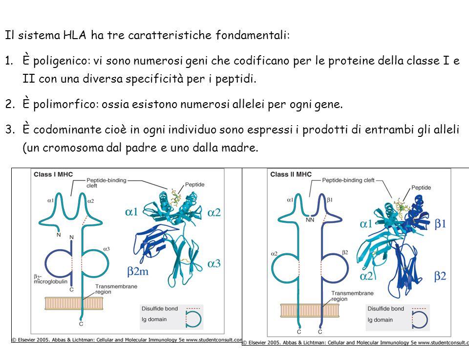 Il sistema HLA ha tre caratteristiche fondamentali:
