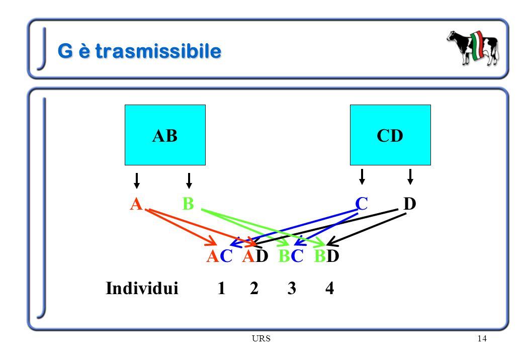 G è trasmissibile AB CD A B C D AC AD BC BD Individui 1 2 3 4 URS