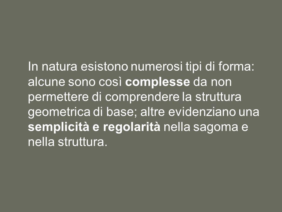 In natura esistono numerosi tipi di forma: alcune sono così complesse da non permettere di comprendere la struttura geometrica di base; altre evidenziano una semplicità e regolarità nella sagoma e nella struttura.