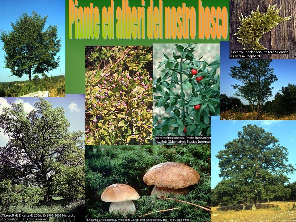 Piante ed alberi del nostro bosco