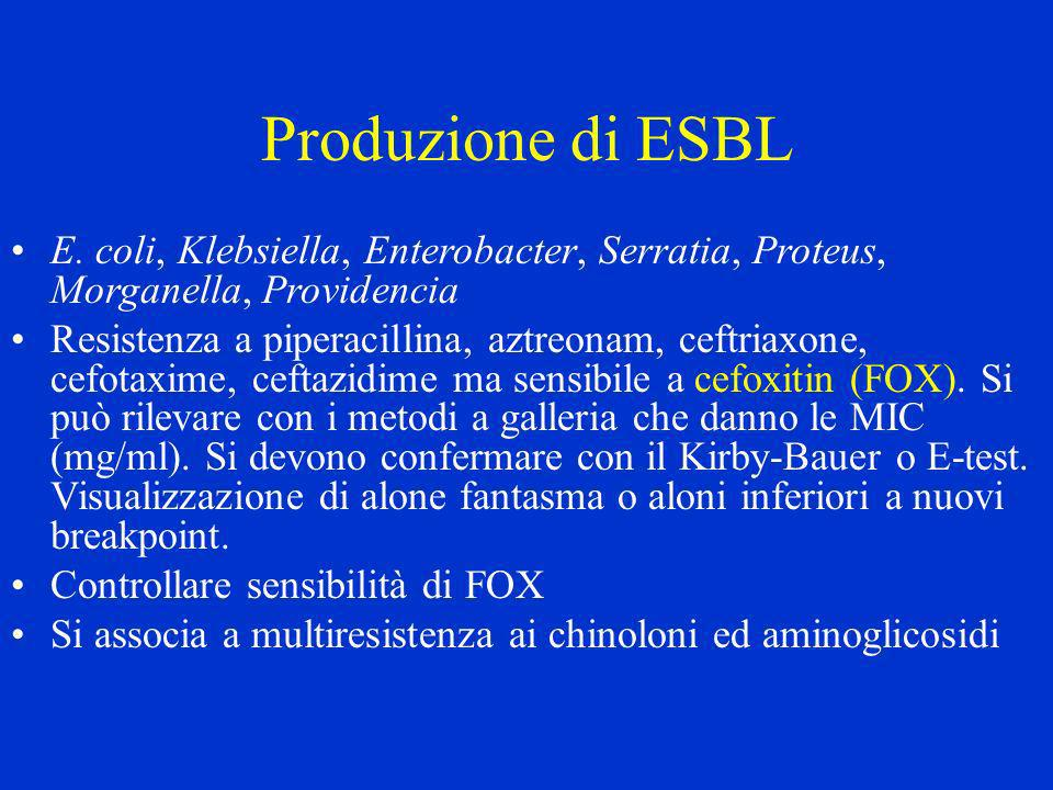 Produzione di ESBL E. coli, Klebsiella, Enterobacter, Serratia, Proteus, Morganella, Providencia.