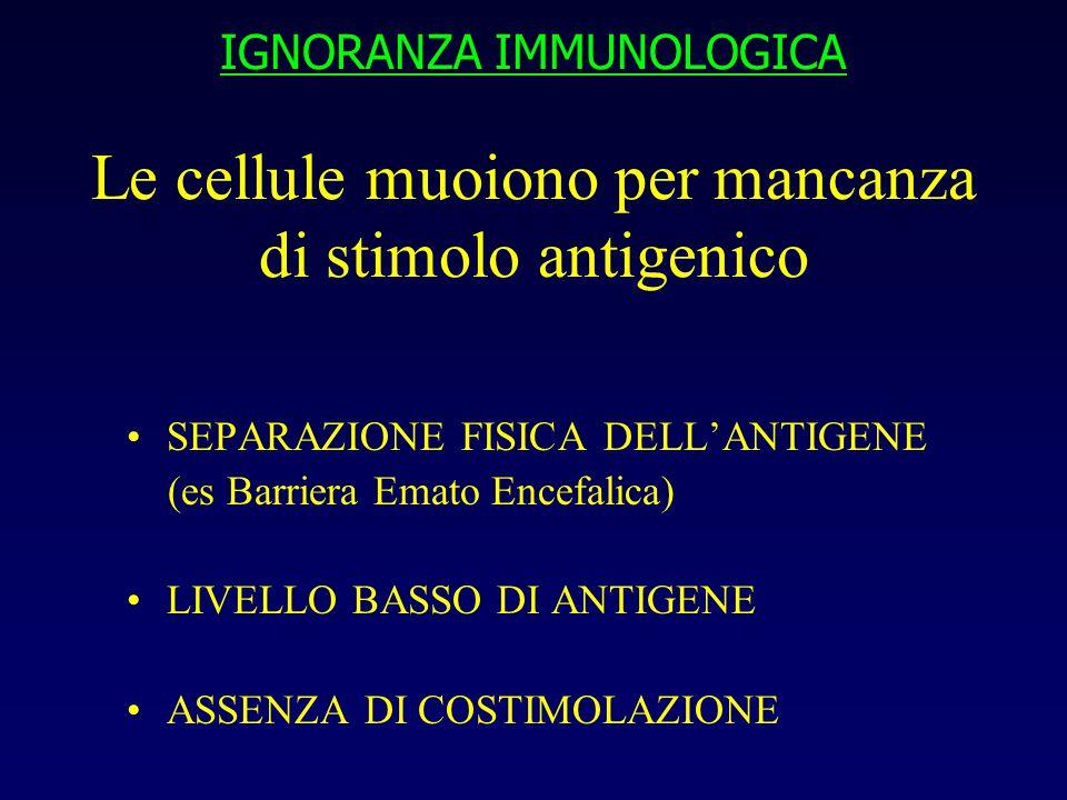 IGNORANZA IMMUNOLOGICA Le cellule muoiono per mancanza di stimolo antigenico