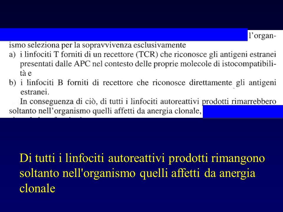 Di tutti i linfociti autoreattivi prodotti rimangono soltanto nell organismo quelli affetti da anergia clonale