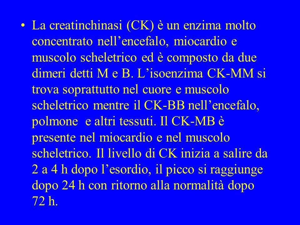 La creatinchinasi (CK) è un enzima molto concentrato nell'encefalo, miocardio e muscolo scheletrico ed è composto da due dimeri detti M e B.