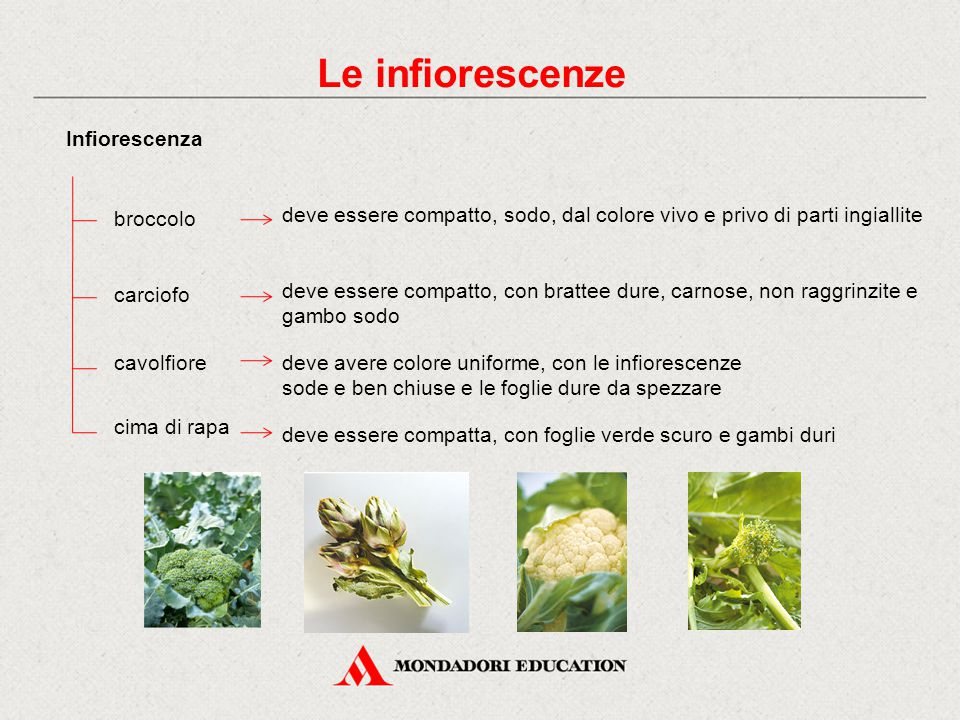 Le infiorescenze Infiorescenza broccolo