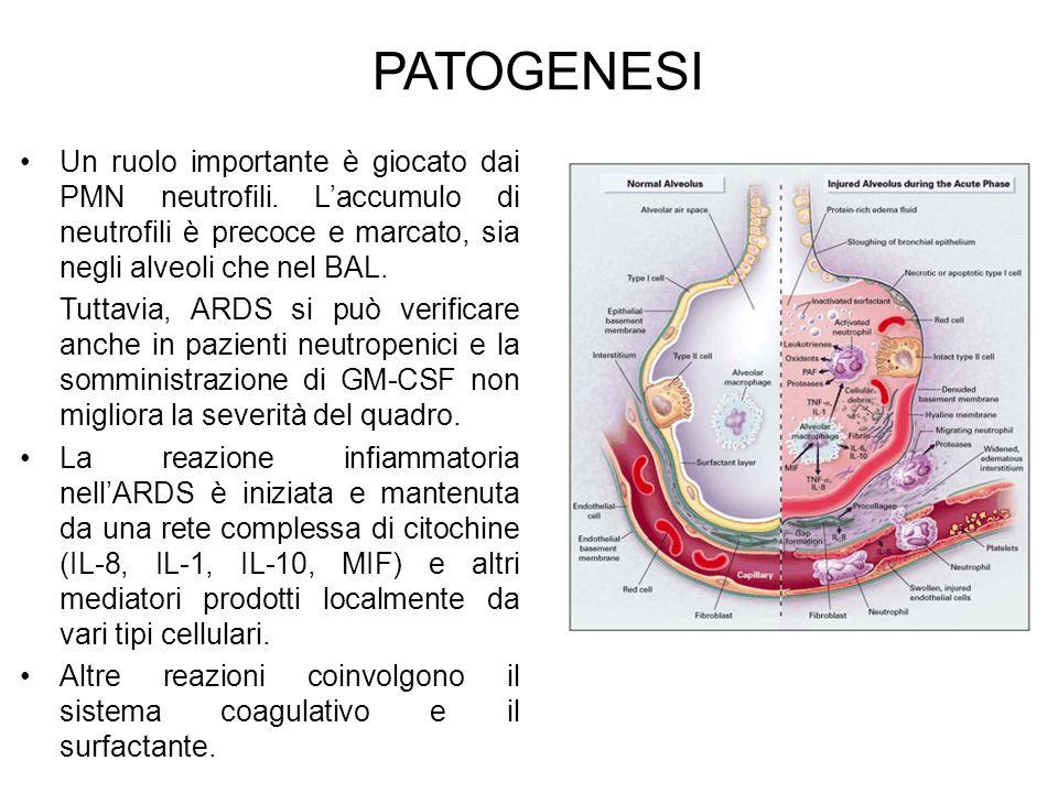 PATOGENESI Un ruolo importante è giocato dai PMN neutrofili. L'accumulo di neutrofili è precoce e marcato, sia negli alveoli che nel BAL.