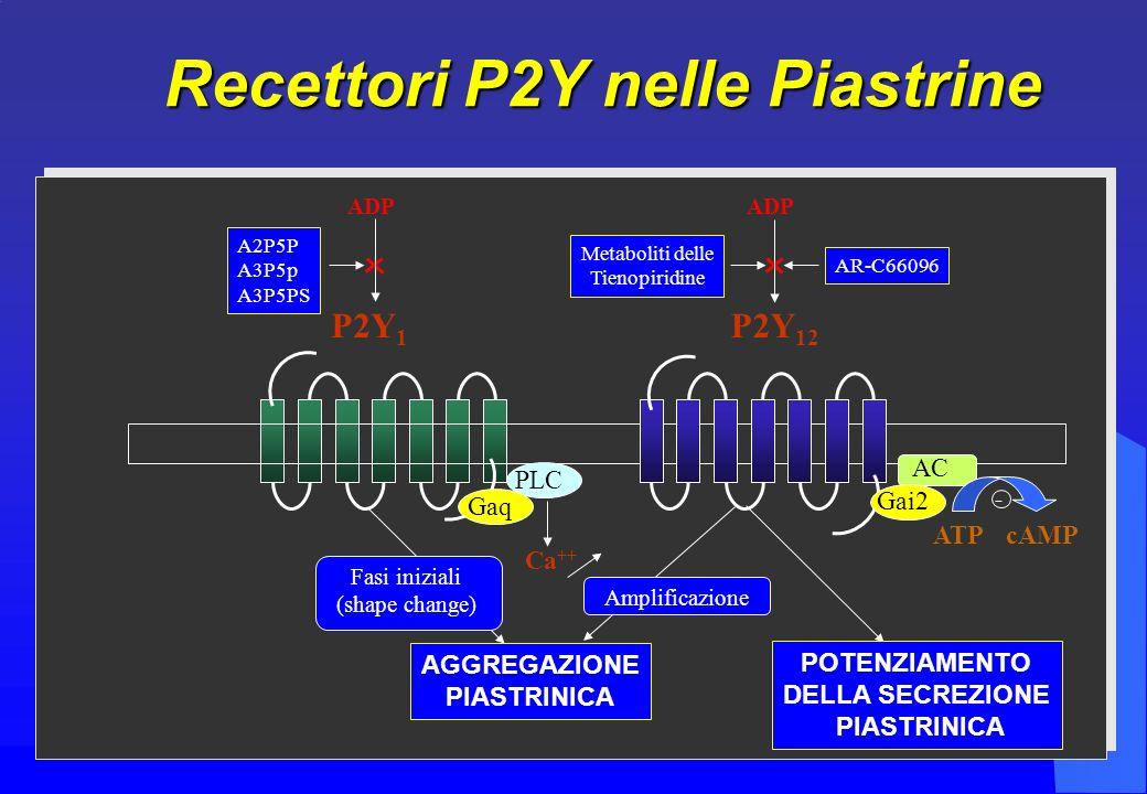 Recettori P2Y nelle Piastrine