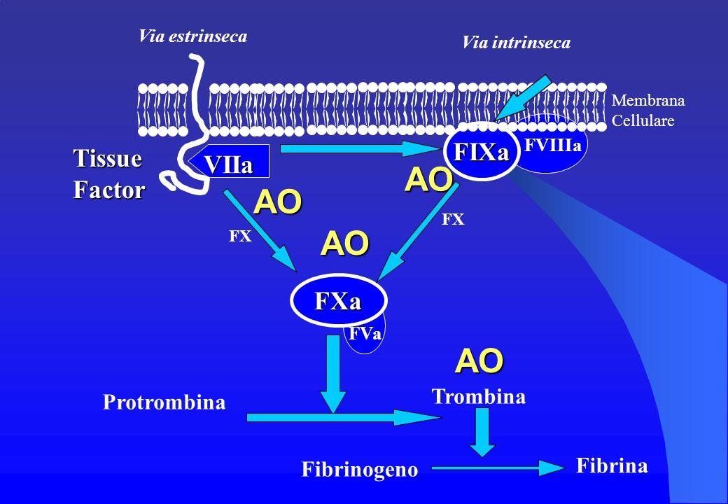 AO AO AO FIXa Tissue Factor VIIa FXa Trombina Protrombina Fibrina