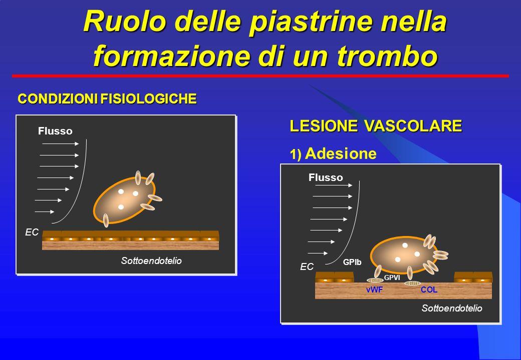 Ruolo delle piastrine nella formazione di un trombo