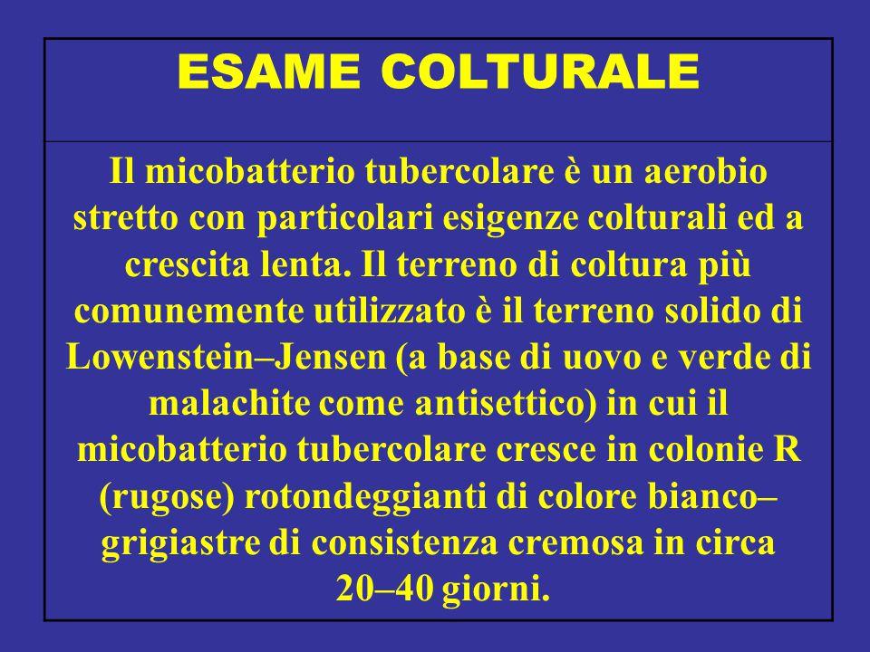 ESAME COLTURALE