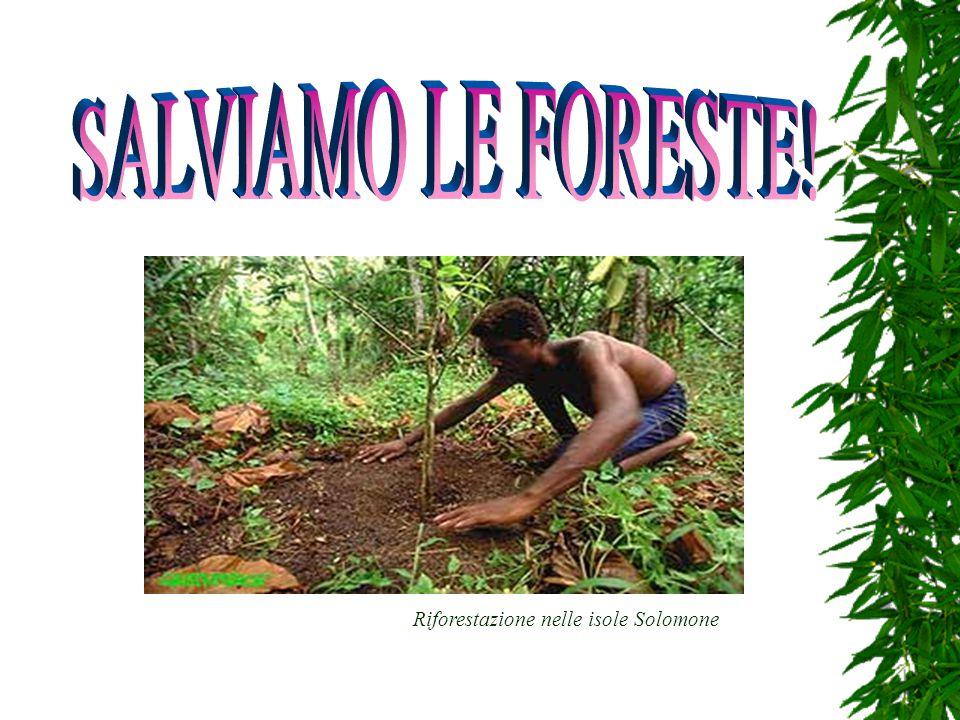 SALVIAMO LE FORESTE! Riforestazione nelle isole Solomone