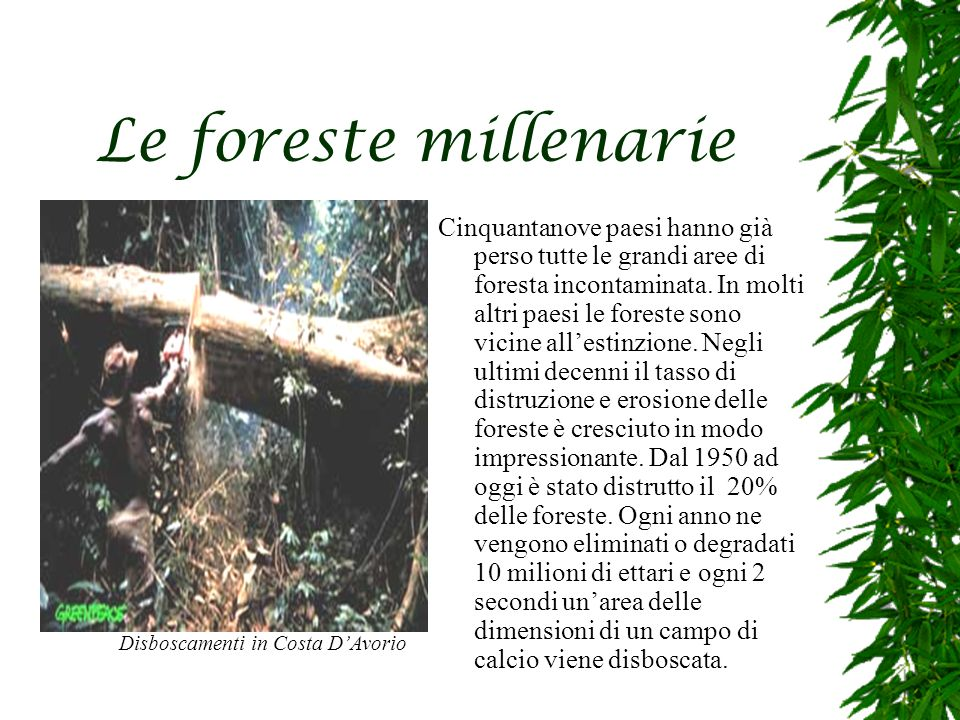 Le foreste millenarie