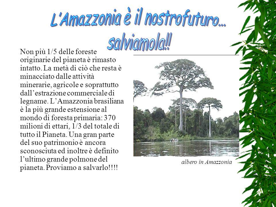 L'Amazzonia è il nostrofuturo…