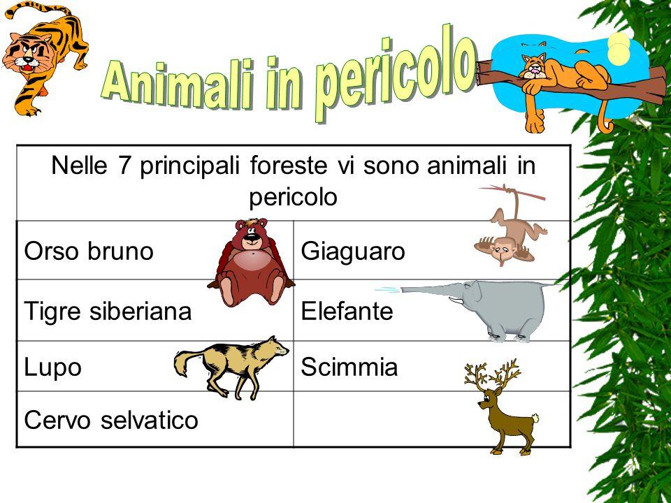 Nelle 7 principali foreste vi sono animali in pericolo
