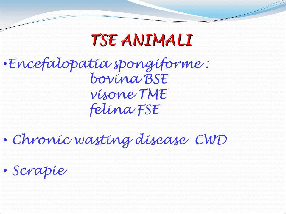 TSE ANIMALI Encefalopatia spongiforme : bovina BSE visone TME