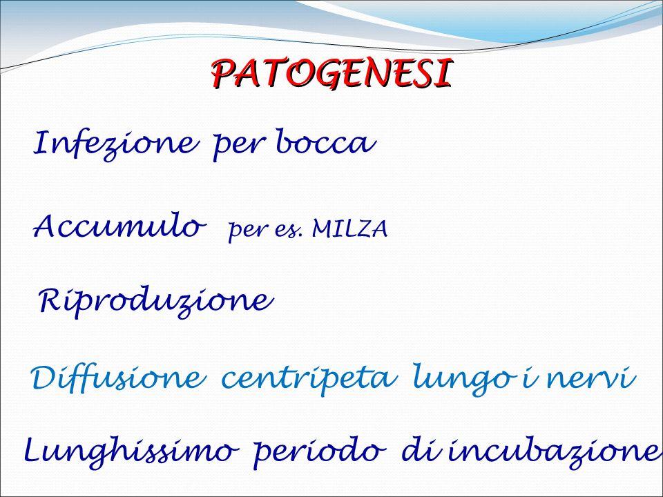 PATOGENESI Infezione per bocca Accumulo per es. MILZA Riproduzione