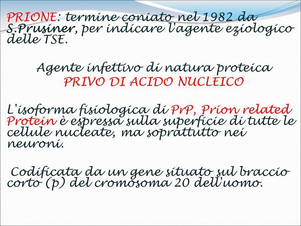 Agente infettivo di natura proteica PRIVO DI ACIDO NUCLEICO