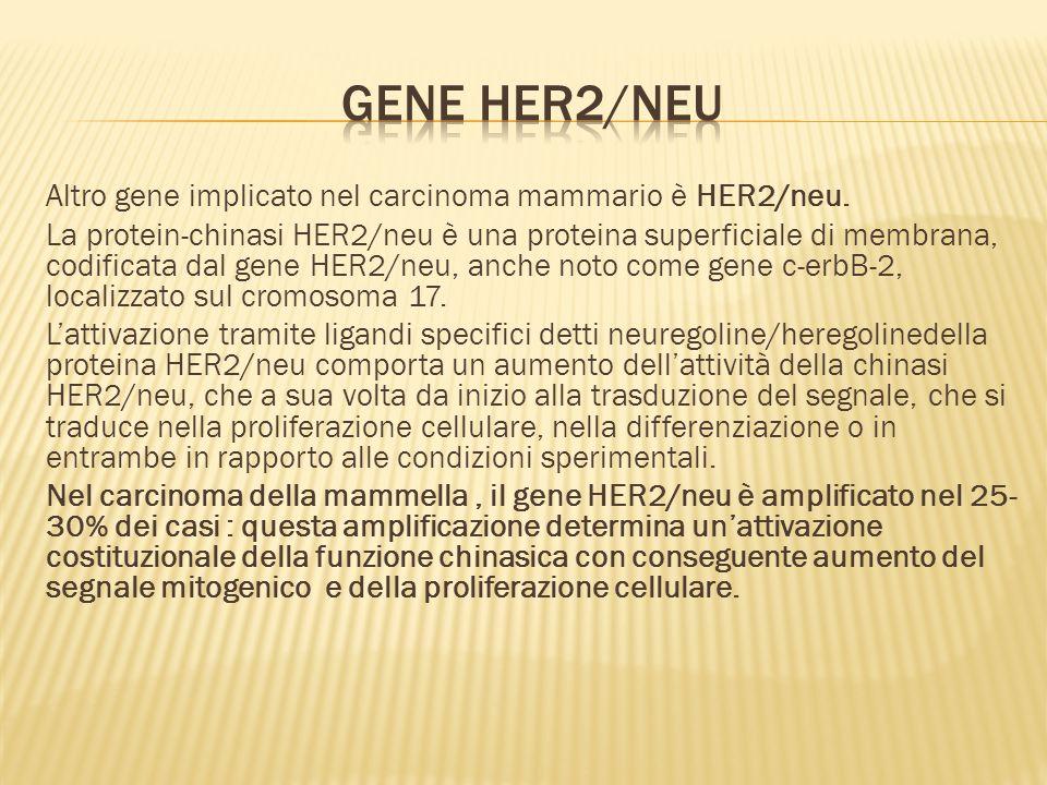 Gene HER2/neu