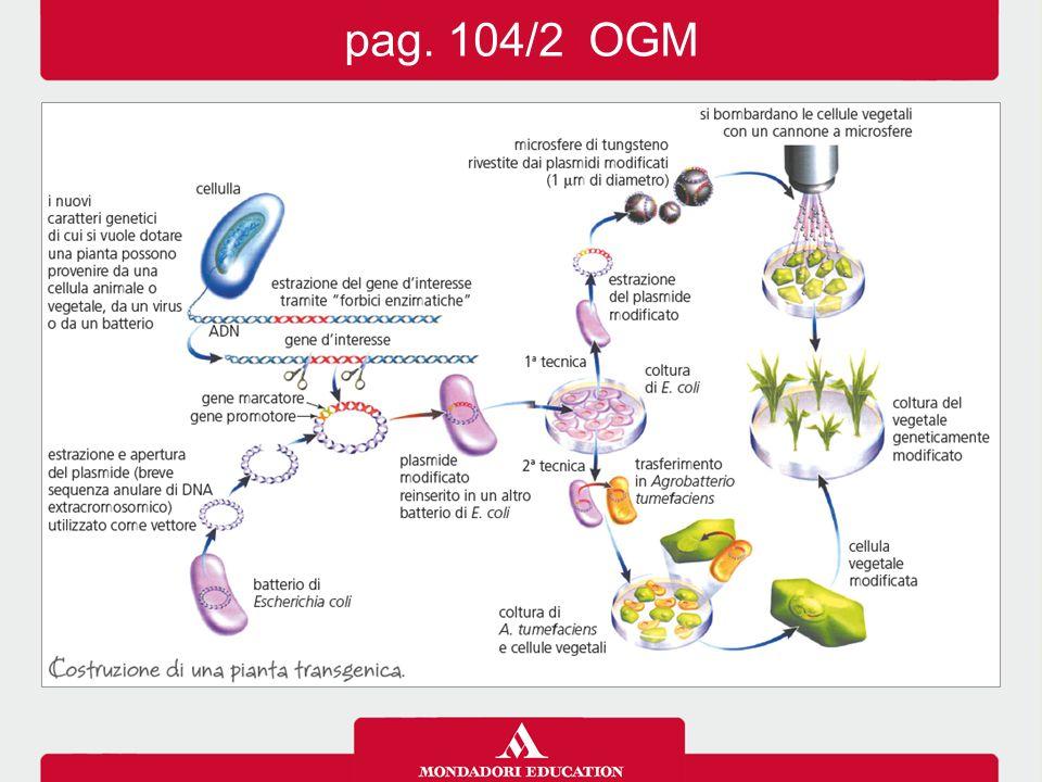 pag. 104/2 OGM 13