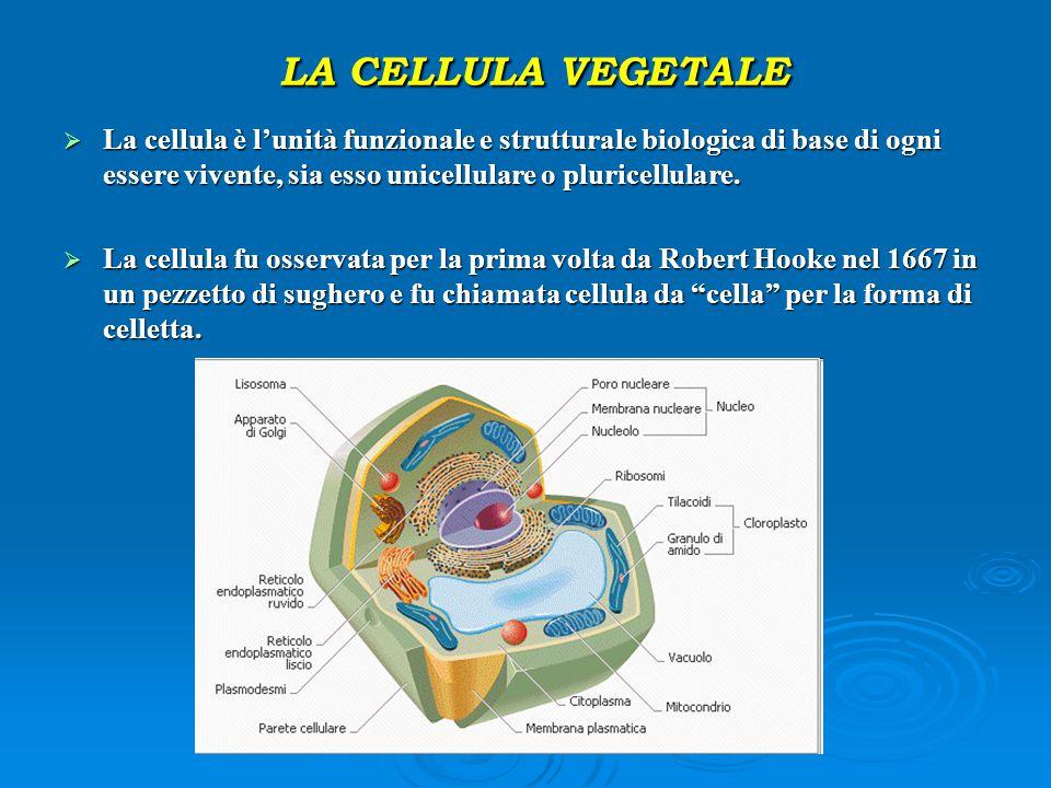LA CELLULA VEGETALE La cellula è l'unità funzionale e strutturale biologica di base di ogni essere vivente, sia esso unicellulare o pluricellulare.