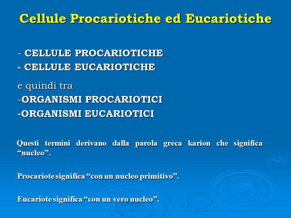 Cellule Procariotiche ed Eucariotiche