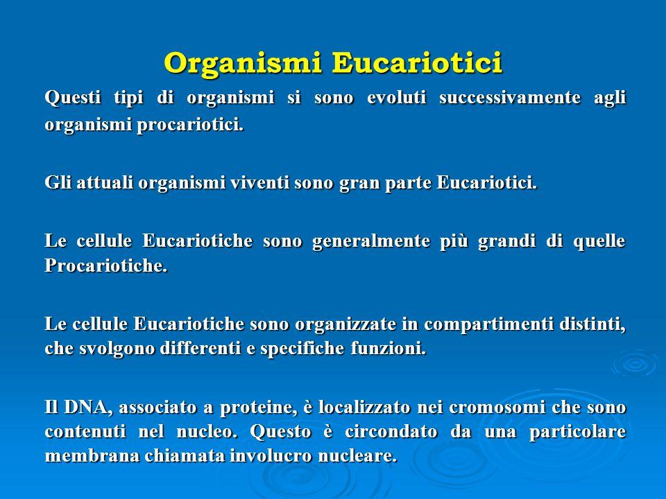 Organismi Eucariotici