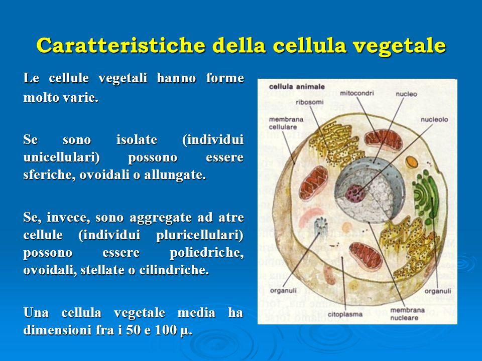 Caratteristiche della cellula vegetale