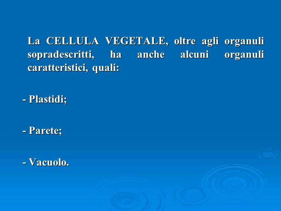 La CELLULA VEGETALE, oltre agli organuli sopradescritti, ha anche alcuni organuli caratteristici, quali: