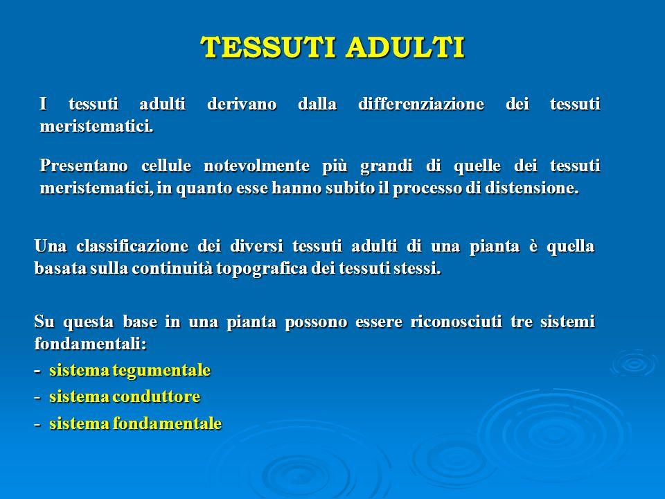 TESSUTI ADULTI I tessuti adulti derivano dalla differenziazione dei tessuti meristematici.