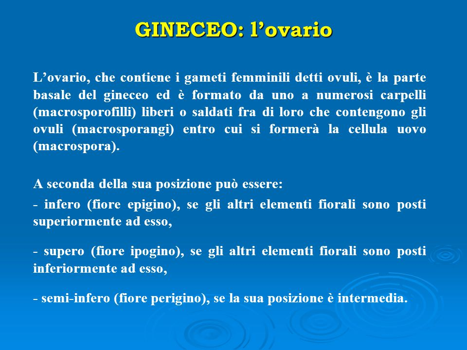 GINECEO: l'ovario